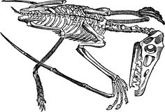 Fossil clipart dino fossil. Elephant skeletons pinterest fossils