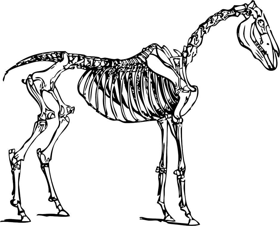 Fossil clipart dinosaur bone. Free skeleton cliparts download