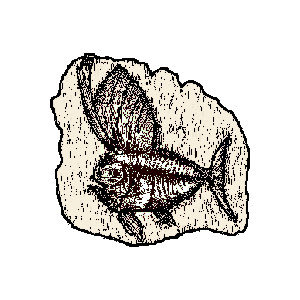 Fish Fossil Clip Art | Clipart Panda - Free Clipart Images