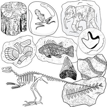 Fossils clip art ii. Fossil clipart trace fossil svg transparent