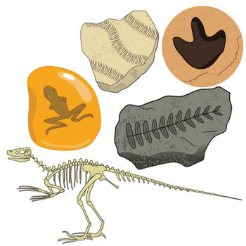 Fossil clipart trace fossil. Fossils clip art ii