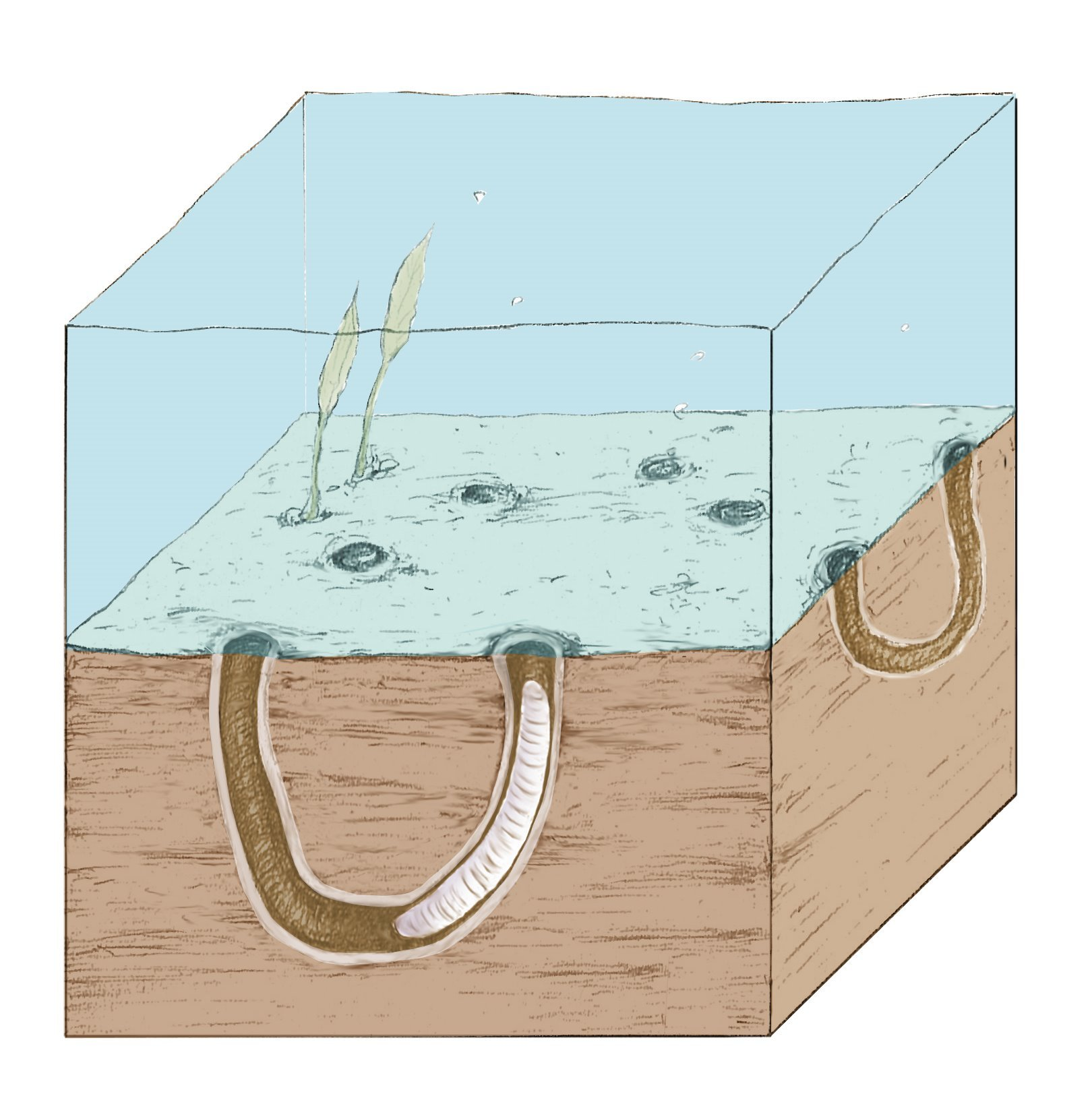 Fossil clipart trace fossil. Digging up the precambrian
