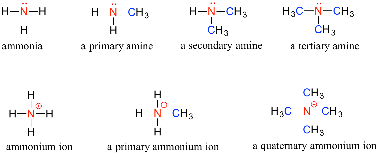 Four clip primary secondary. Functional groups and