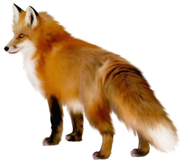 Fox clipart png. Transparent gallery yopriceville high