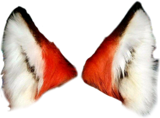Fox ears png. Popular and trending foxears