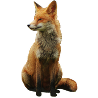 Fox png. Download free photo images