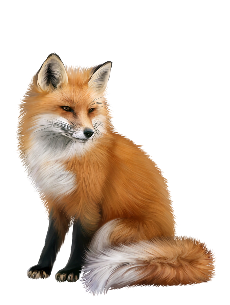 Fox png. Animal d tubes pinterest