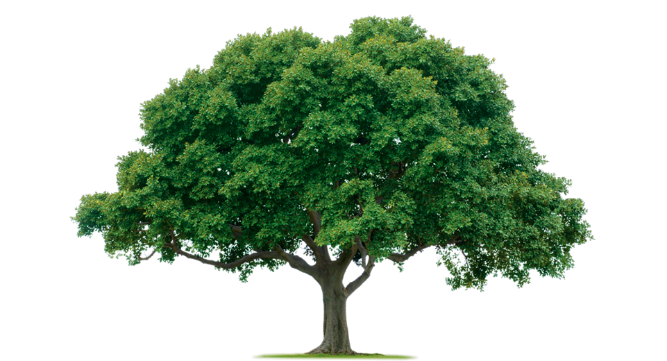 Tree .png. Png images pictures download