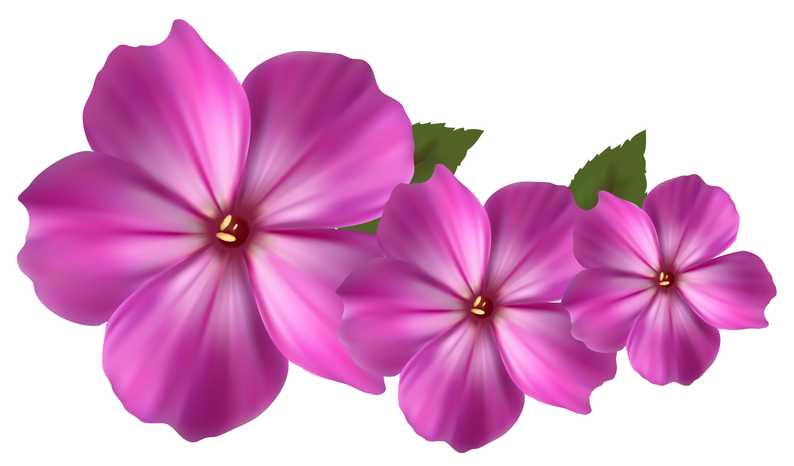 Free flower png images. Pink flowers clip art