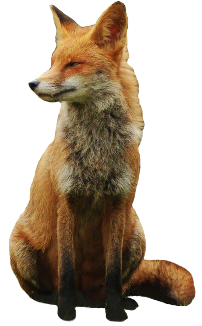 Free fox png. Transparent images only picture