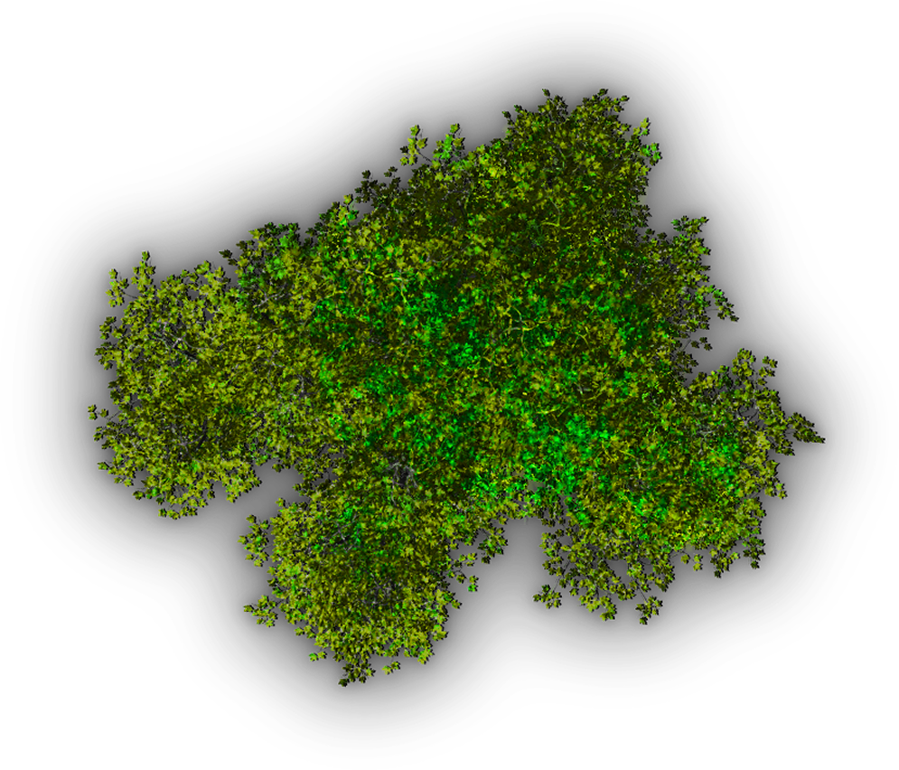 Free moss png. Background top tree transparent