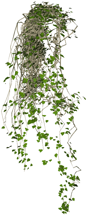 Hanging plants png. Ivy vine texture free