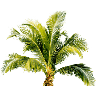 Free palm tree png. Transparent stickpng small treet