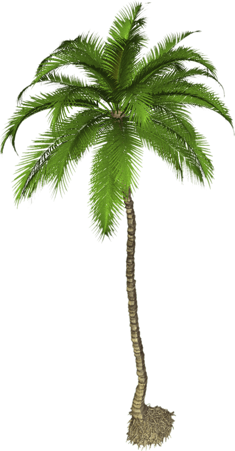Free palm tree png. Pic images toppng transparent
