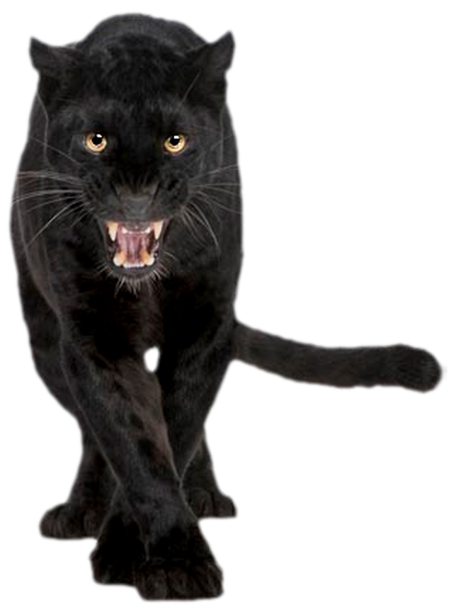 Panther png. Images transparent free download