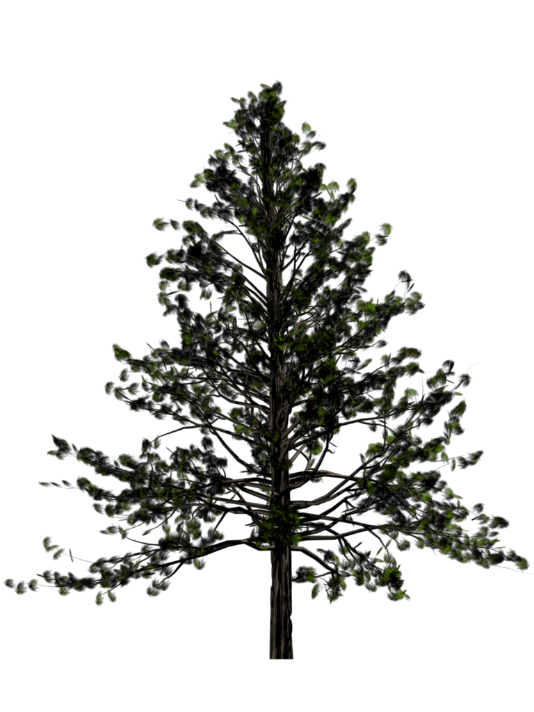 Fir tree transparent images. Pine trees png clipart stock