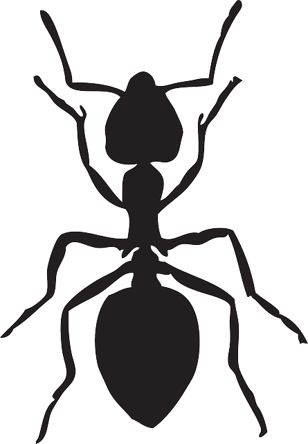 Free png clipart ant black and white. Image on pixabay insect