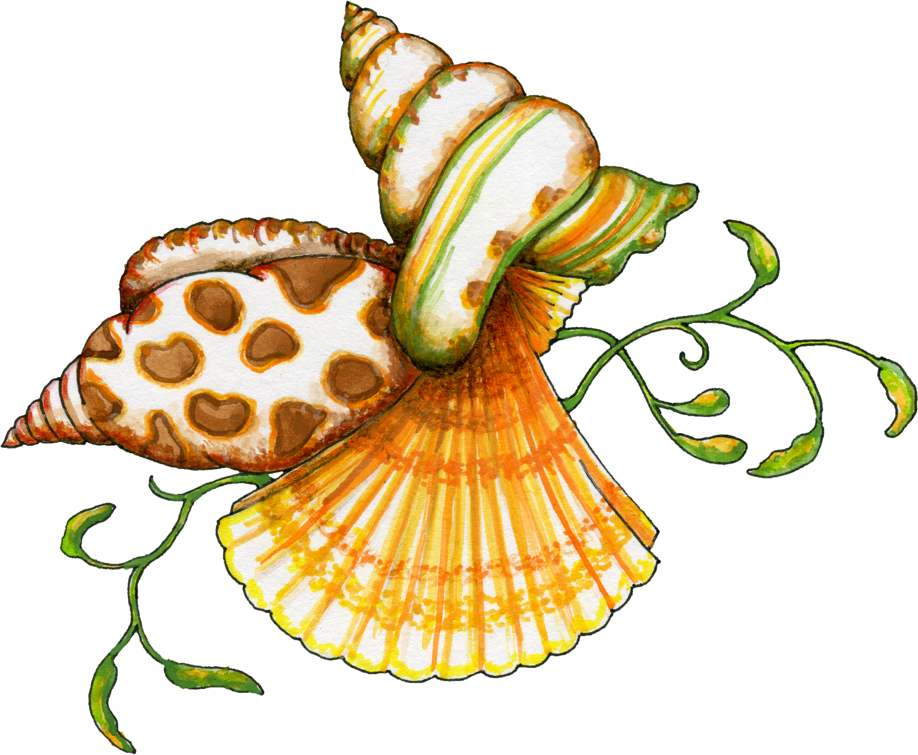 Seashell clipart png. Free transparent files and