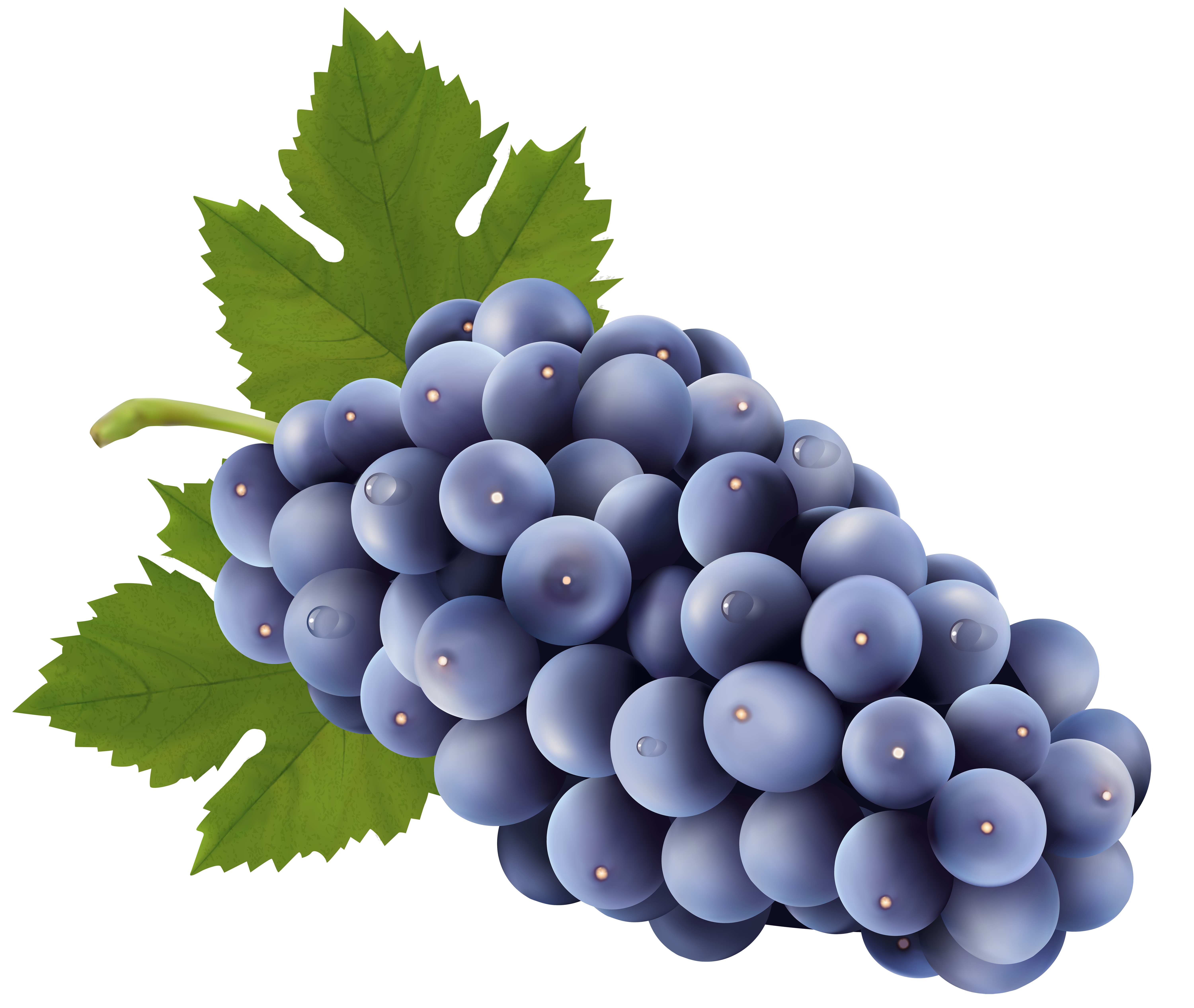 Collection of free grype. Transparent grapes high quality svg black and white library