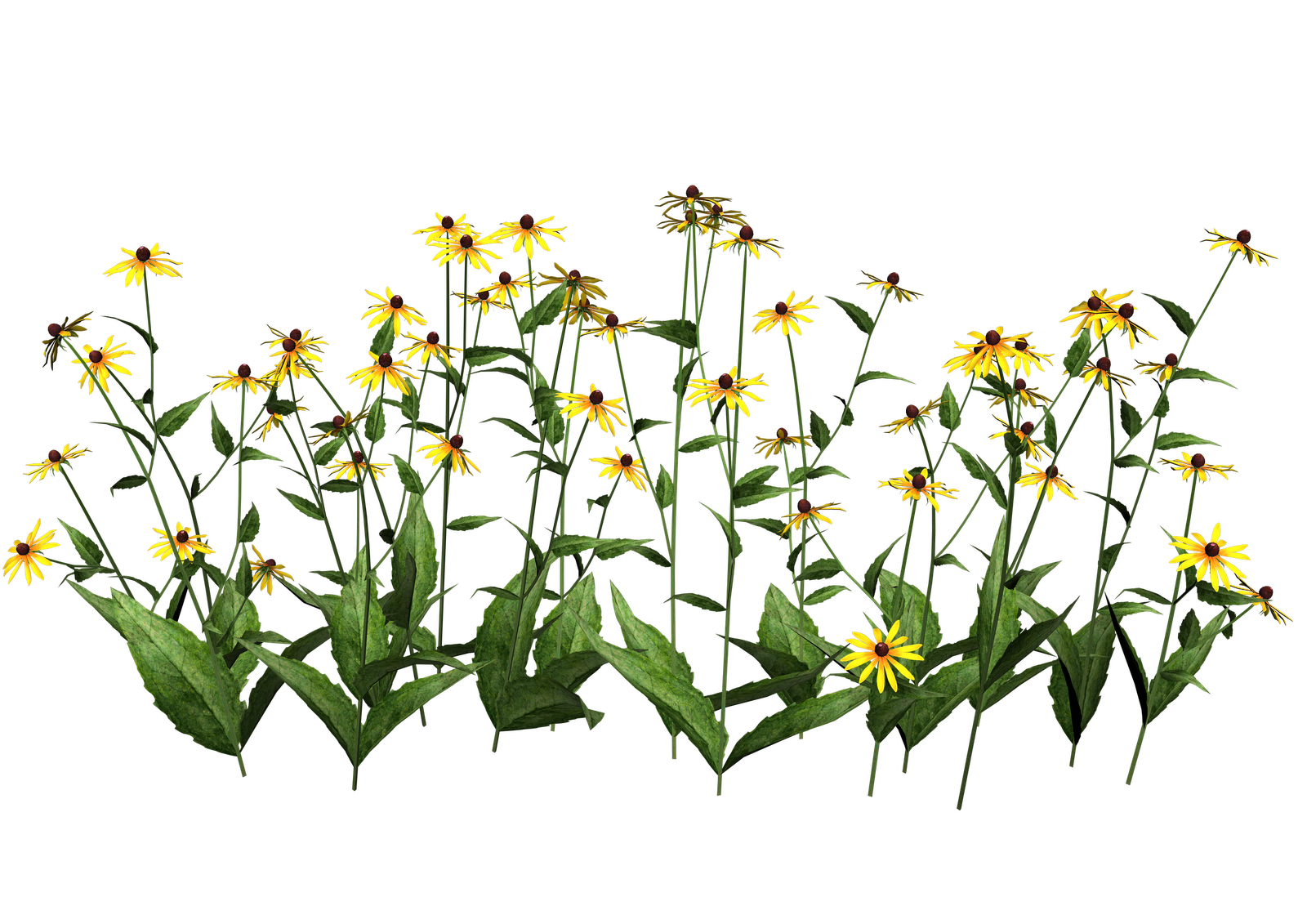 Flower plants png. Free high resolution graphics
