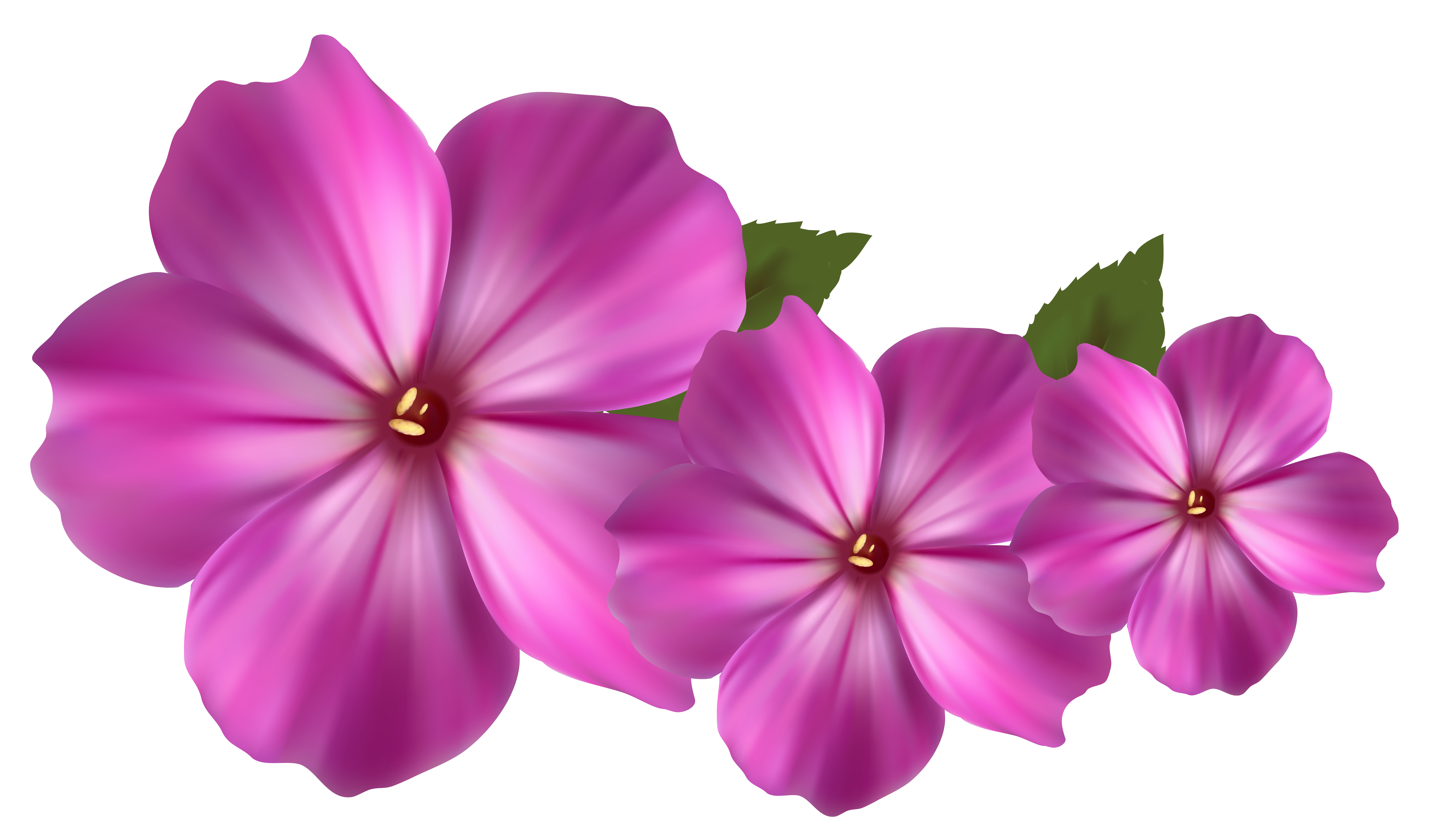 Flower png images. Pink decor clipart gallery
