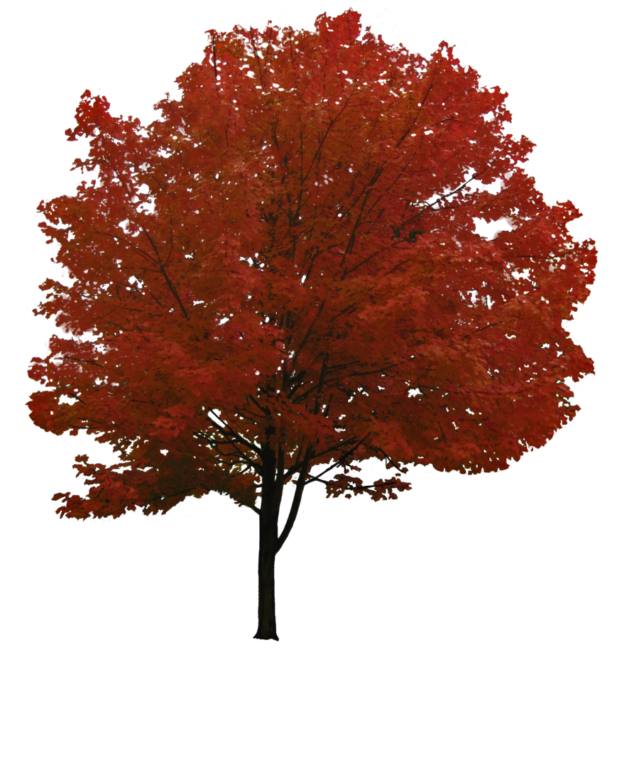Red tree png. Image free download picture