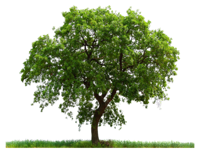 Free png trees download. Tree transparent image and