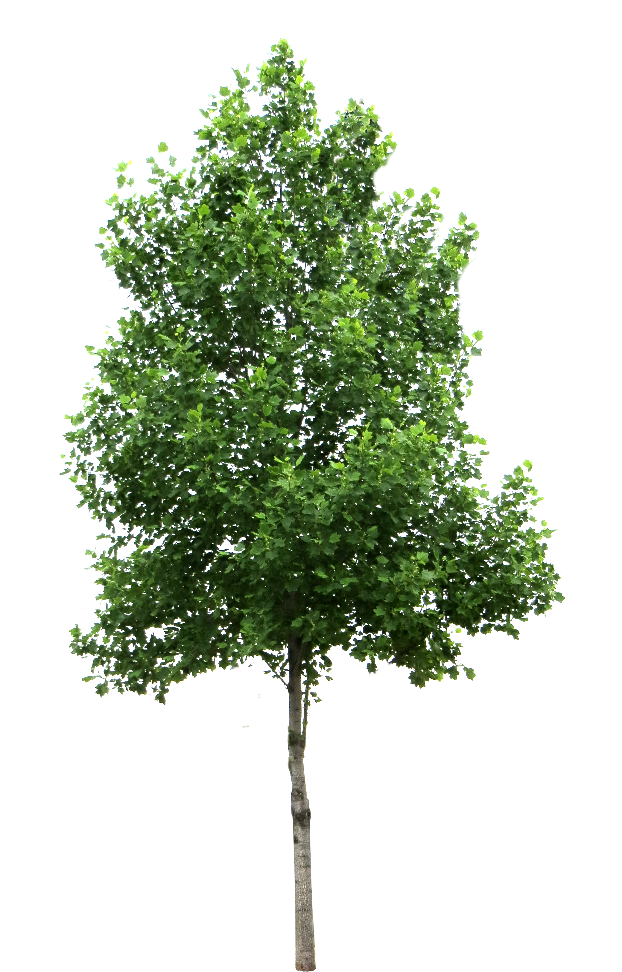 Arboles png photoshop. Free texture trees lugher