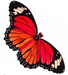 Free printable clipart butterfly. Clip art printables