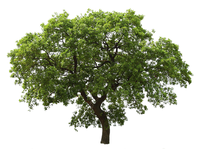 Photoshop png trees. Tree images free