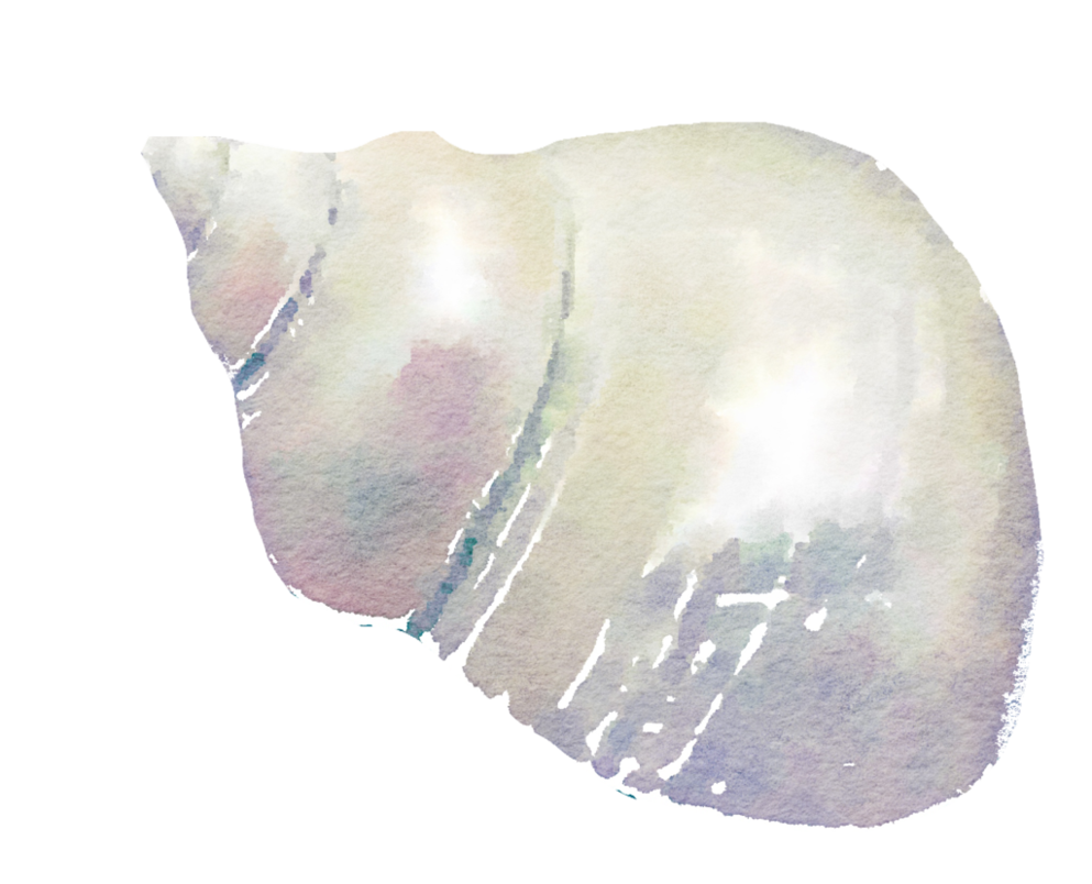 Free watercolor png. To use seashell by