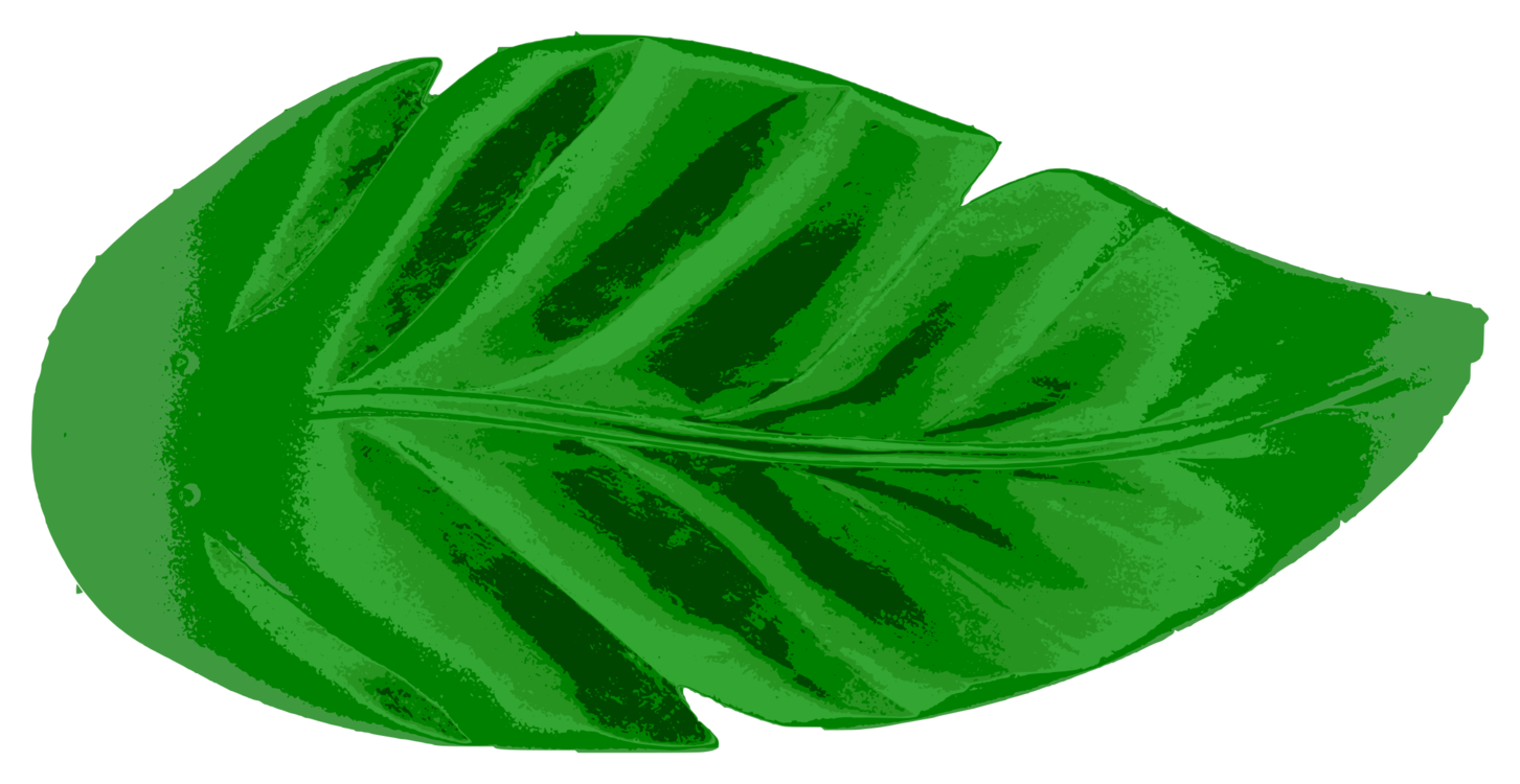 Free watercolor tropical leaves png. Leaf tropics earth palm