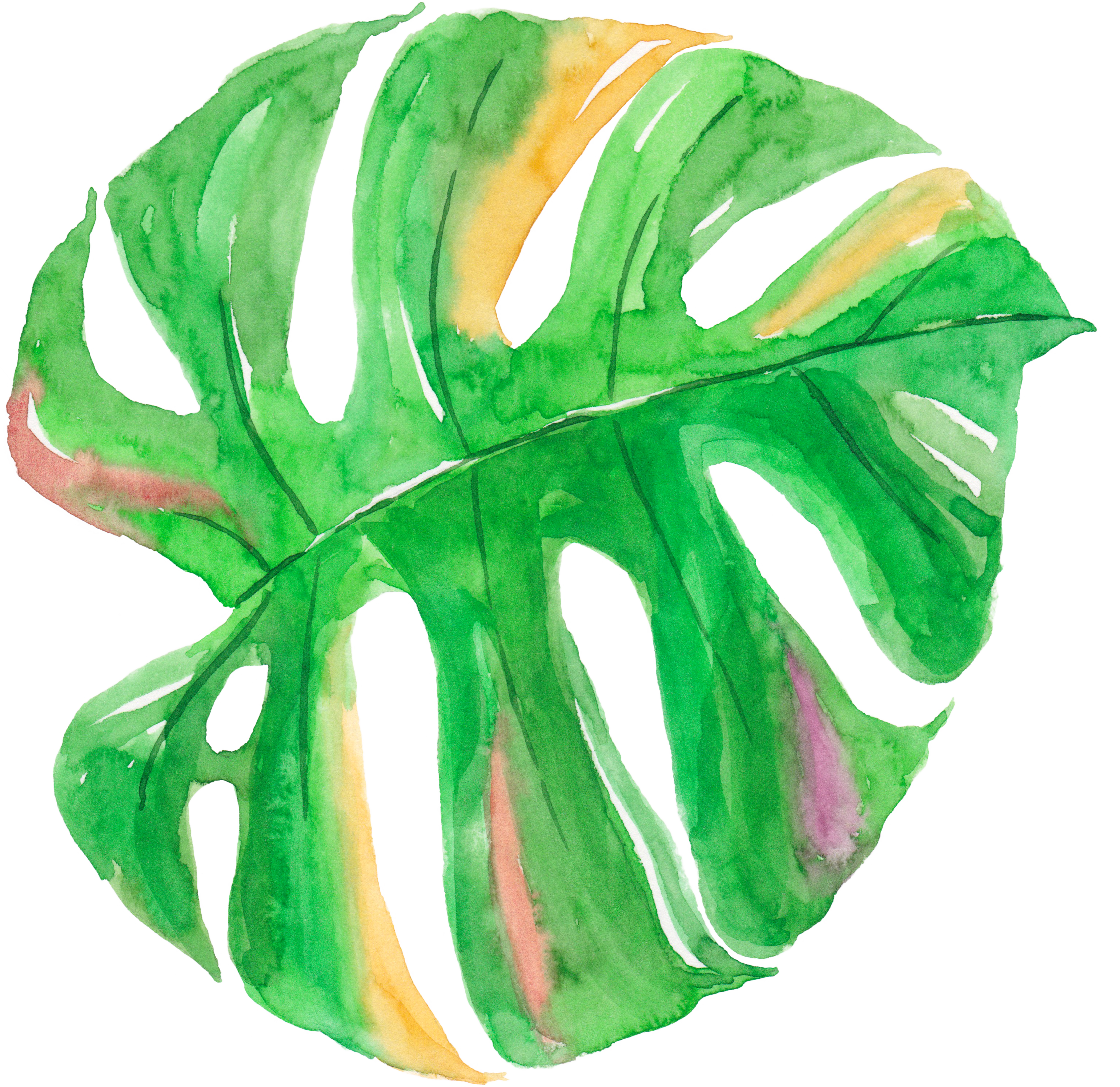 Tropical watercolor png. Leaf painting canvas palm