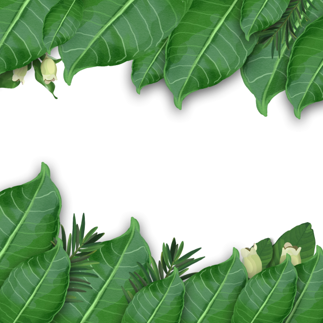 Free watercolor tropical leaves png. Leaf arrangement artistic and