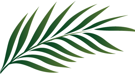 Watercolor palm leaves png. Download hd tropical tree