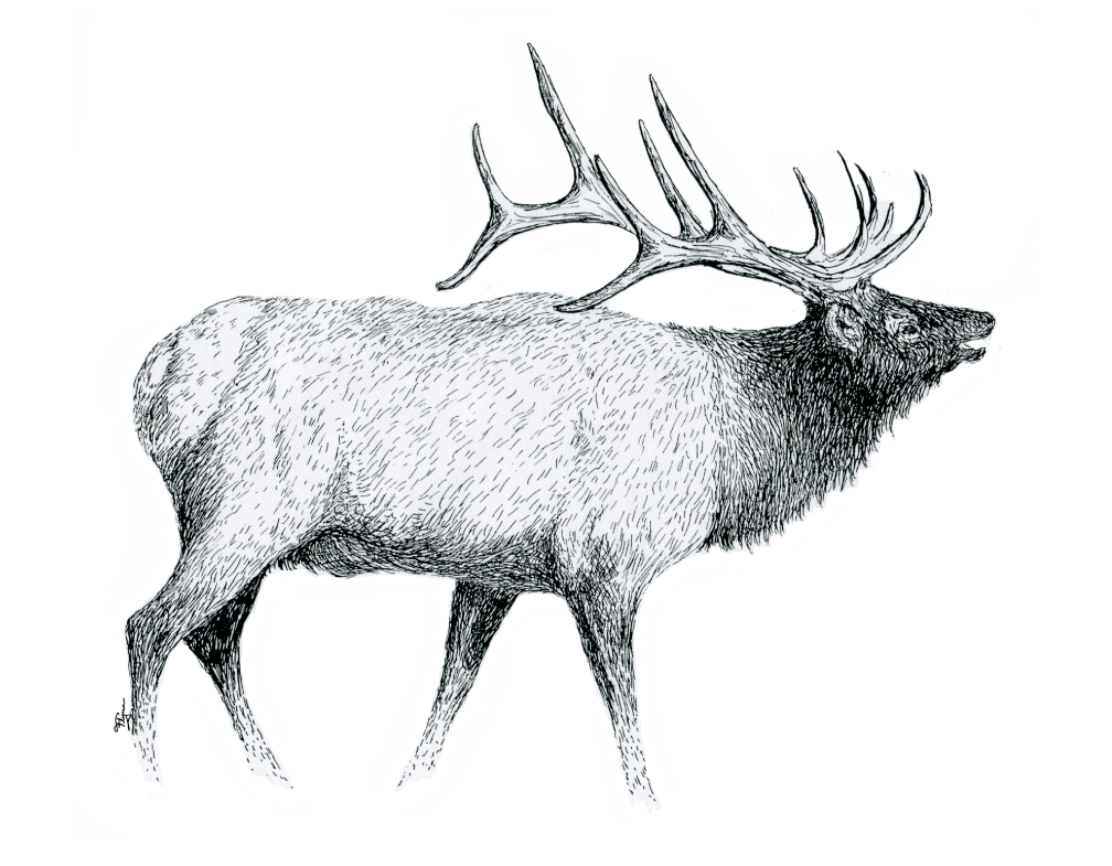 Pen and elk by. Drawing apple ink vector stock