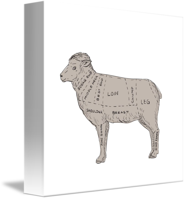 Freelance drawing vintage. Lamb meat cut map