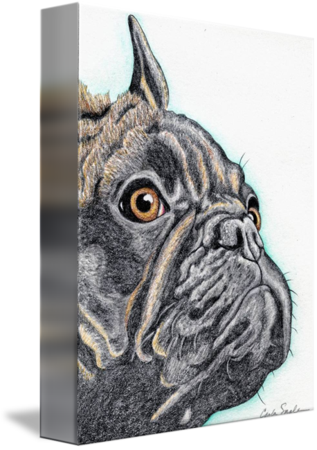 French drawing bulldog. Brindle by carla smale