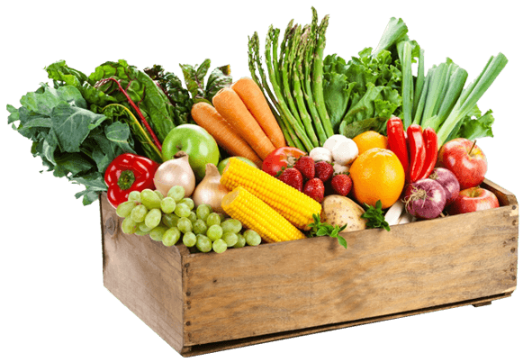 Groceries vector grocery delivery. Boston organics organic produce
