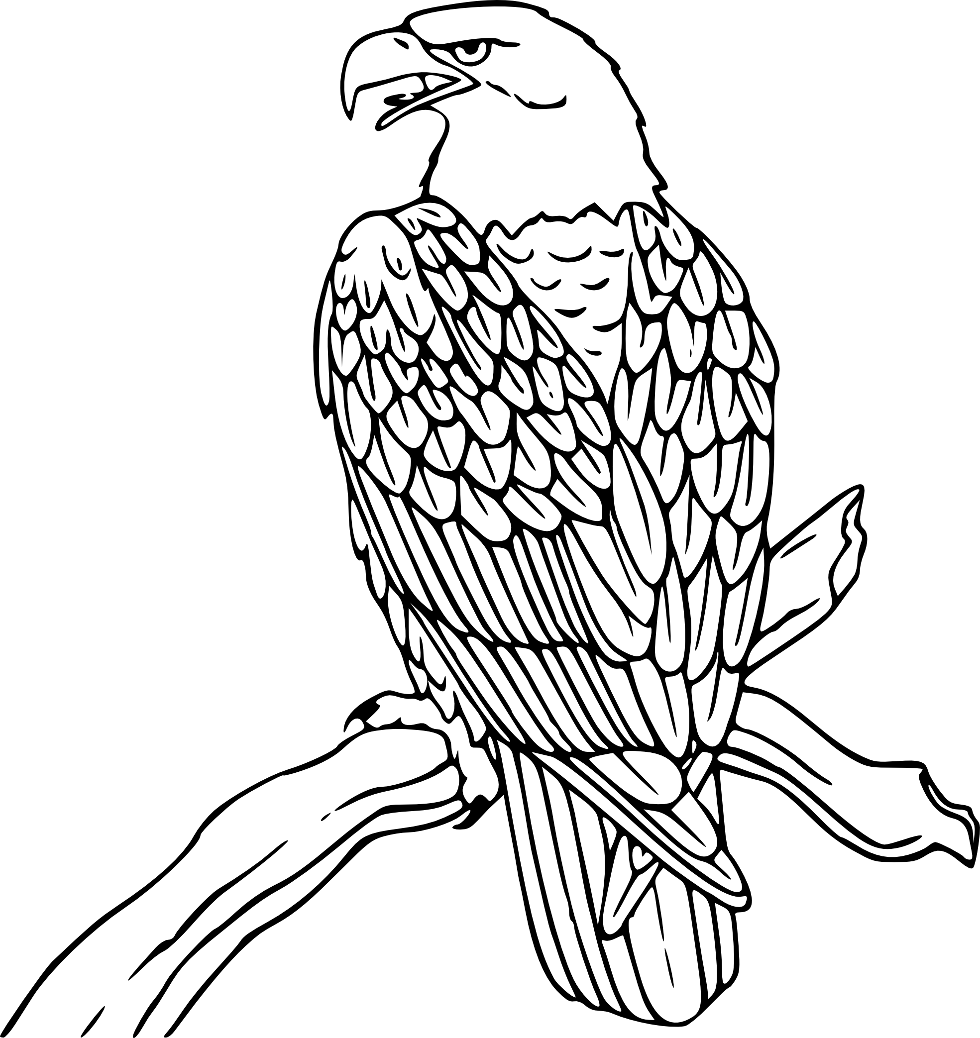 Drawing eagles ink. Cute friendly eagle clipart