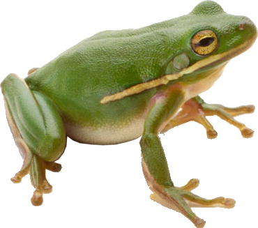 wednesday frog png