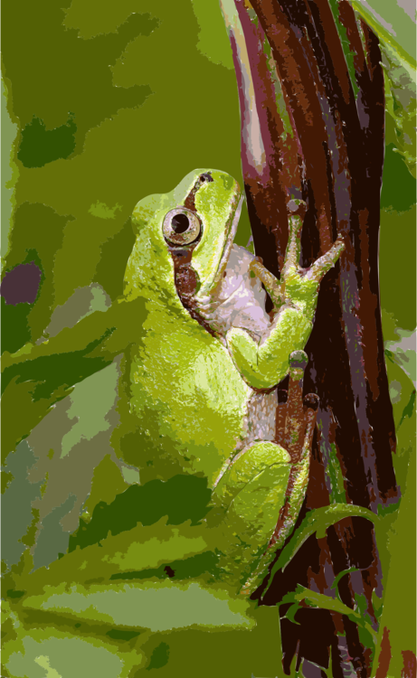 Frogs clipart green frog. Japanese tree amphibian free