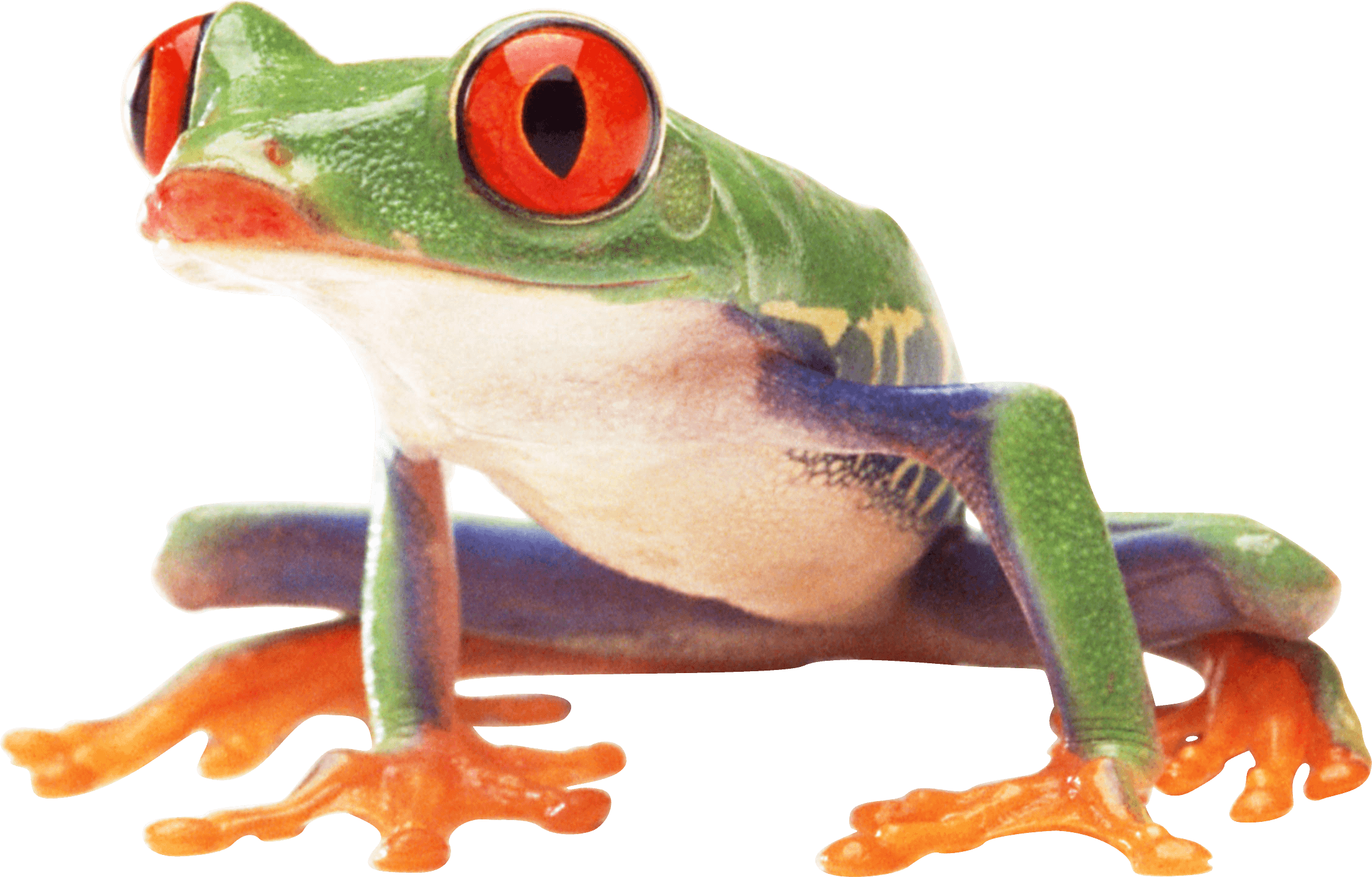 Frogs clipart tree frog. Toad clip arts for