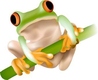 Frogs clipart tree frog. Cartoon cliparts co pinterest