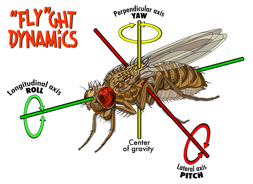 Fruit fly png. Flight the why files