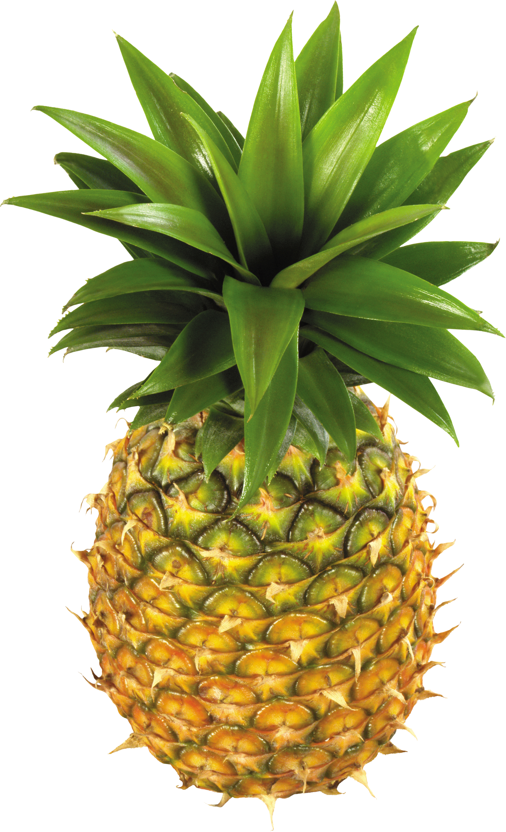 Pineapple png. Fruits and nuts images
