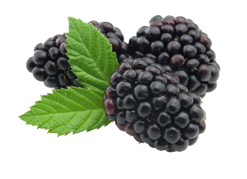 Fruits transparent blackberry. Png image web icons