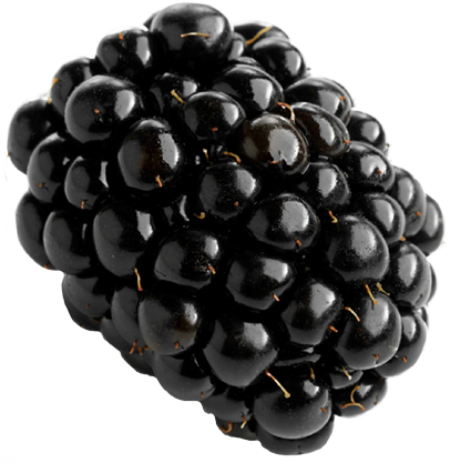 Fruits transparent blackberry. Png