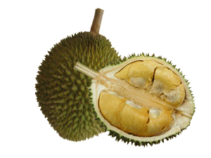 Fruits transparent durian. Francis junction diplomacy a