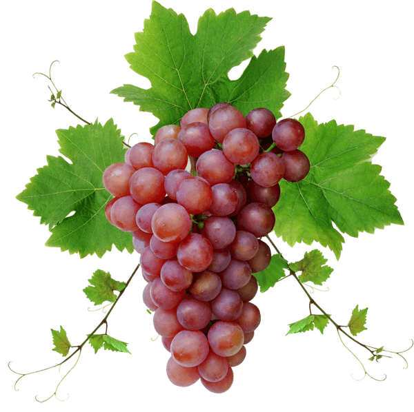 Grape transparent tumblr. Red with leaves png